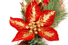 Holly berry flower and Christmas decoration Stock Photos