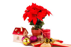 Holly berry flowers and Christmas decoration Stock Photos