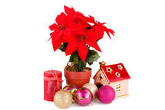 Holly berry flowers and Christmas decoration Stock Photo