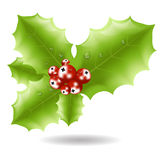 Holly berry icon. Christmas symbol vector Royalty Free Stock Photos
