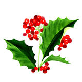 Holly berry icon, Christmas symbol. Watercolor painting on white background Royalty Free Stock Images