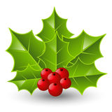 Holly berry icon Stock Image