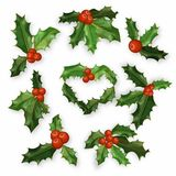 Holly berry leaves Christmas symbol set. Vector design Royalty Free Stock Photography