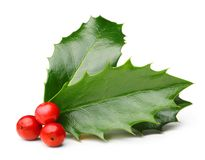 Holly berry leaves isolated Royalty Free Stock Photo