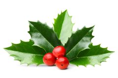 Holly berry leaves isolated. Holly berry leaves Christmas decoration isolated on white background Stock Image