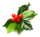 Holly berry leaves isolated Stock Photos