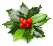 Holly berry leaves isolated Stock Images