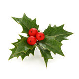 Holly berry sprig, christmas symbol. On a white background Stock Images