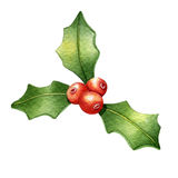Holly berry. Watercolor Stock Photos