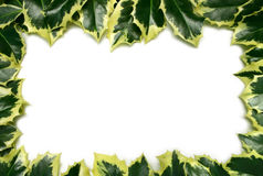 Holly Border Royalty Free Stock Image