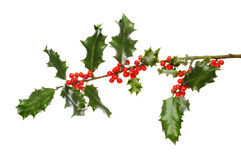 Holly bough with berries Royalty Free Stock Photography