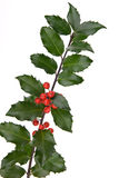 Holly Branch Stock Photography