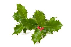 Free Holly Branch Stock Photo - 36058540