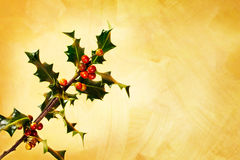 Holly branch with berries Royalty Free Stock Photos