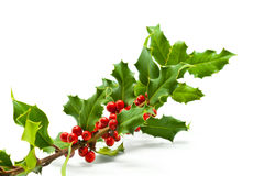 Holly Branch and Berries Stock Photos