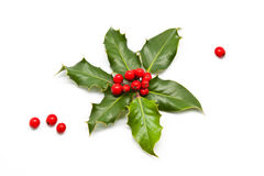 Holly Branch and Berries Royalty Free Stock Photography