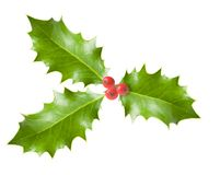 Holly branch with berries Stock Photography