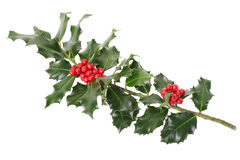 Holly branch, Christmas decoration Royalty Free Stock Images