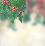 Holly branch on gray background Stock Photography