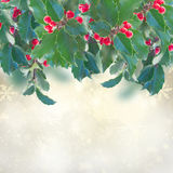 Holly branch on gray background Stock Image