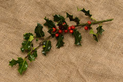 Holly branch with red berries on the bagging Stock Photos