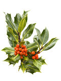 Holly branch with red berries. Isolated holly branch with green spiked leaves and red berries Royalty Free Stock Photos
