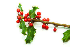 Holly Branch and Red Berries Royalty Free Stock Image