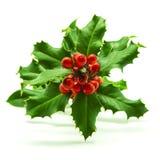 Holly Branch y bayas rojas Foto de archivo libre de regalías