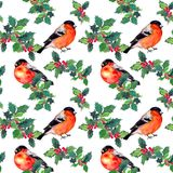 Holly branches and finch birds. Watercolor repeated pattern. With mistletoe Stock Image