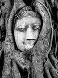 Holly Buddha-hoofd, Ayutthaya Stock Afbeelding