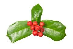 Holly Christmas-decoratie met het Knippen van weg Stock Foto's