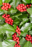 Holly, Christmas decoration background Royalty Free Stock Photography