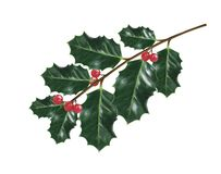 Holly Christmas decorations. stock illustration