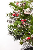 Holly and Christmas tree branches Stock Photography
