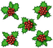 Holly. Digital illustration of five clusters of holly Royalty Free Stock Photo