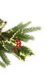 Holly and fir tree branches Stock Images