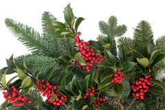 Holly and Fir Royalty Free Stock Images