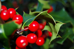 Holly with fruits Royalty Free Stock Photos