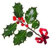 Holly (Ilex) - isolated on white, with red ribbon. A branch of real holly, with red berries, isolated on a white background Stock Photography