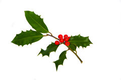 Holly ilex on white Stock Photography