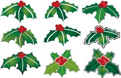 Holly Illustrations Royalty Free Stock Image