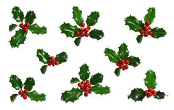 Free Holly Isolated On White Stock Image - 6758361