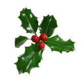 Holly Isolated on White Royalty Free Stock Image
