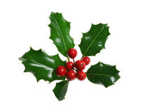 Holly Isolated on White royalty free stock photos