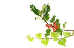Holly and ivy Royalty Free Stock Images