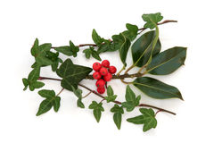 Holly and Ivy. Ivy leaf and holly leaf sprigs with red berries, isolated over white background stock image
