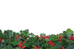 Holly and Ivy footer. Holly with red berries, ivy and evergreen leaves arranged as a footer against a white background royalty free stock images