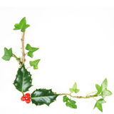 Holly and ivy frame royalty free stock image