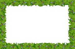 Holly and ivy page border. Stock Photos