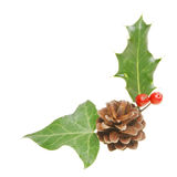 Holly ivy and pine cone Royalty Free Stock Photo
